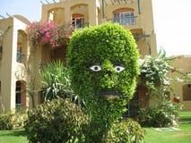 Cespuglio verde divertente con gli occhi e la bocca fotografia stock libera da diritti