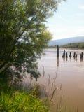 Cespuglio verde ed alta erba sulla sponda del fiume Fotografie Stock Libere da Diritti