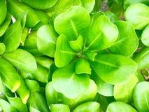 Cespuglio verde intenso del mare Fotografie Stock