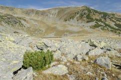 Cespuglio verde in montagne di Parang Fotografia Stock