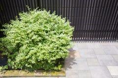 Cespuglio verde vicino alla parete di pietra Fotografie Stock Libere da Diritti
