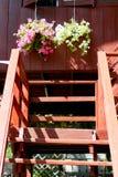 Cesta colgante colorida de la flor Foto de archivo