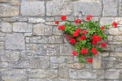 Cesta colgante de la flor foto de archivo libre de regalías