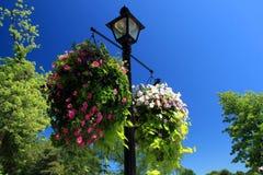 Cesta colgante de la flor Fotografía de archivo