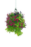 Cesta colgante de la flor Imágenes de archivo libres de regalías