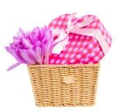 Cesta com açafrão e caixa de presente de prado Imagens de Stock