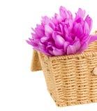 Cesta com as flores do açafrão de prado Imagens de Stock Royalty Free