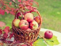 Cesta com as maçãs na grama Imagem de Stock