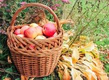 Cesta com as maçãs nas folhas amarelas Fotos de Stock