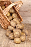 Cesta com batatas frescas fotografia de stock