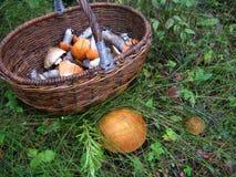 Cesta com cogumelos Fotografia de Stock Royalty Free