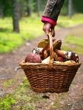 Cesta com cogumelos Fotos de Stock Royalty Free