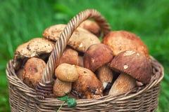 Cesta com cogumelos brancos Foto de Stock