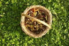 Cesta com cogumelos comestíveis Fotografia de Stock