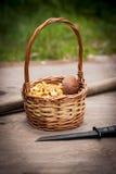 Cesta com cogumelos saborosos Fotos de Stock Royalty Free