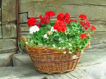 Cesta com flores em um fundo da natureza no campo Fotos de Stock