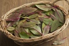 Cesta com folhas do amaranto imagens de stock