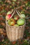 Cesta com maçãs Fotografia de Stock