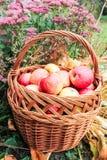 Cesta com maçãs e flores Imagens de Stock Royalty Free