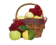 Cesta com maçãs e viburnum Imagens de Stock Royalty Free