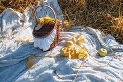 A cesta com maçãs vermelhas custa no feno Fotografia de Stock Royalty Free