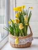 A cesta com narcisos amarelos decorou galinhas e ovos das etiquetas Imagens de Stock Royalty Free
