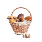 Cesta com os cogumelos diferentes da floresta Fotografia de Stock