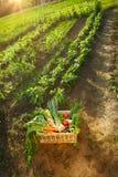 Cesta com os vegetais no jardim Foto de Stock