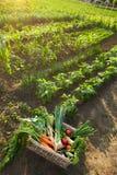 Cesta com os vegetais no jardim Imagem de Stock