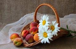 Cesta com pêssegos maduros Fotografia de Stock