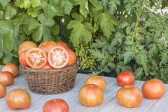 Cesta com tomates Fotografia de Stock
