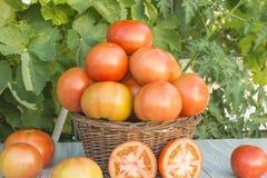 Cesta com tomates Fotos de Stock