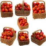 Cesta com tomates Imagens de Stock Royalty Free