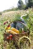 Cesta com vegetais Imagem de Stock