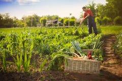 Cesta com vegetais e famer no fundo Foto de Stock Royalty Free