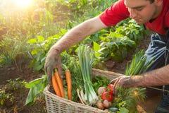 Cesta com vegetais e um fazendeiro Imagens de Stock Royalty Free