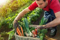 Cesta com vegetais e um jardineiro Fotos de Stock Royalty Free
