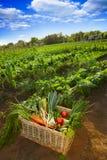 Cesta completa com os vegetais no jardim Foto de Stock