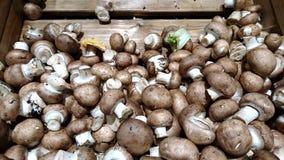 Cesta completa dos cogumelos imagem de stock royalty free