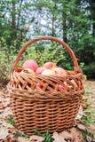 Cesta completamente das maçãs Imagens de Stock