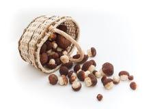 Cesta completamente de cogumelos do cepe e da pilha pequena fotografia de stock royalty free