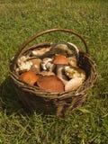 Cesta completamente de cogumelos frescos Fotos de Stock Royalty Free