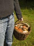 Cesta completamente de cogumelos frescos Fotografia de Stock Royalty Free