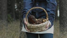 A cesta completamente dos cogumelos vídeos de arquivo
