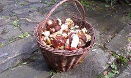 Cesta completamente dos cogumelos Imagem de Stock Royalty Free
