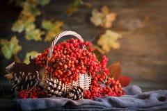 Cesta con el serbal y las hojas en una tabla de madera Aún-vida del otoño Imagen de archivo libre de regalías
