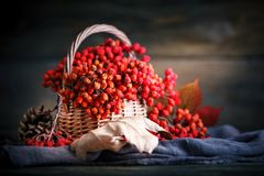 Cesta con el serbal y las hojas en una tabla de madera Aún-vida del otoño Fotografía de archivo libre de regalías