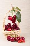 Cesta con la cereza madura Foto de archivo libre de regalías