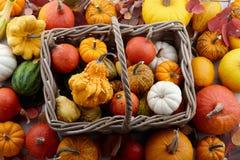 Cesta con las calabazas y las calabazas coloridas para Halloween y la acción de gracias Fotografía de archivo libre de regalías