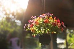 Cesta con las flores hermosas Imágenes de archivo libres de regalías
